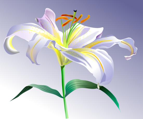 Xara X: Лилия(Векторная графика и иллюстрация)