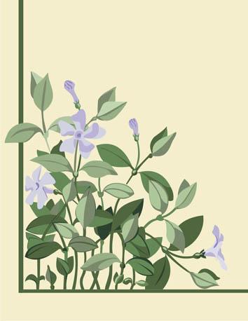 Узоры:  Растение барвинок(Векторная графика и иллюстрация)