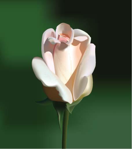 VGlow: роза(Векторная графика и иллюстрация)