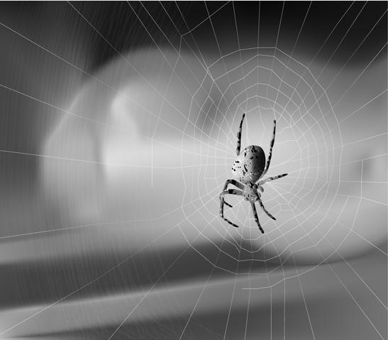 Vector Constructor: паутинка(Векторная графика и иллюстрация)