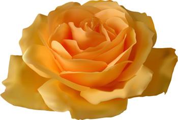 V-Best: Роза(Векторная графика и иллюстрация)